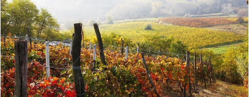 ACHAT - Vins bios et nature du Languedoc, Du Producteur au Dégustateur