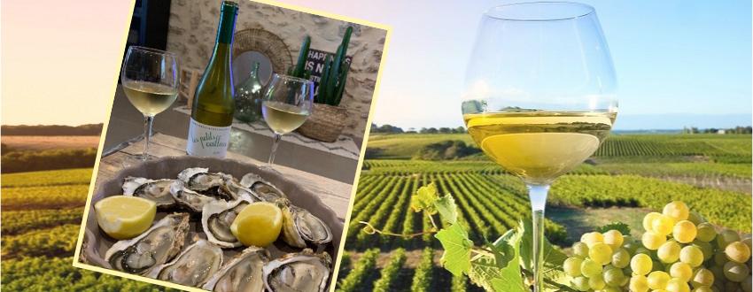 ACHAT - Vins blanc du Languedoc - Au meilleur Prix !